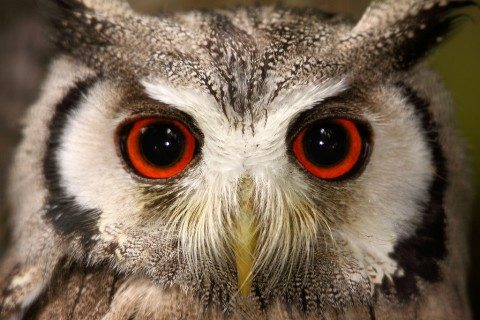owl-photography